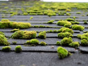 5 Surprising Things That Damage Residential Roofing
